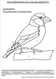 Przydomowy karmnik jest znaną i lubianą formą pomocy ptakom. Pozwala na obcowanie z dziką przyrodą bez wychodzenia z domu.Niewłaściwe dokarmianie może jednak p Bird Patterns, Embroidery Patterns, Hand Embroidery, Adult Coloring Pages, Coloring Books, Solar System Coloring Pages, Bird Theme, Bird Crafts, Rug Hooking