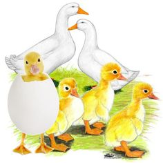 I dream of owning ducks on my farm and letting them lay their eggs. I would not slaughter them but keep them as companion animals.