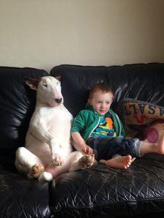 Blog dedicado a la raza Bull terrier ingles donde encontraras consejos, fotos, videos, ayuda y todo sobre esta  hermosa raza