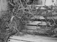 weathered bench with vines (at family friend's prior home,bkfld,2008)