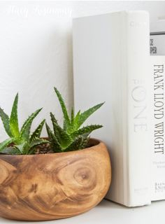 15 easy to care for houseplants!