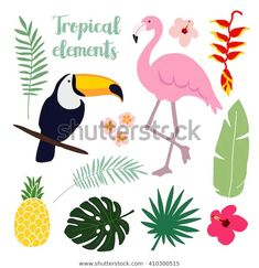 Find Summer Tropical Graphic Elements Toucan Flamingo stock images in HD and millions of other royalty-free stock photos, illustrations and vectors in the Shutterstock collection. Tropical Animals, Tropical Birds, Deco Jungle, Tropical Party, Marianne Design, Plant Illustration, Jungle Animals, Floral Illustrations, Bullet Journal Inspiration