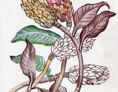 """Check out new work on my @Behance portfolio: """"Flora"""" http://be.net/gallery/59175201/Flora"""