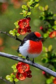 Beautiful birds, ,abstract birds, birds, bird k… - Animal Cute Birds, Pretty Birds, Beautiful Birds, Animals Beautiful, Cute Animals, Exotic Birds, Colorful Birds, Bird Pictures, Animal Pictures