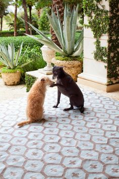 Bunny Williams's Pet-Friendly Homes - Design Chic