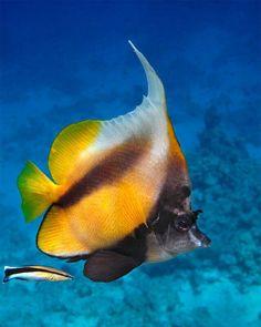 By A Natureza E Os Animais: Animais Aquaticos.