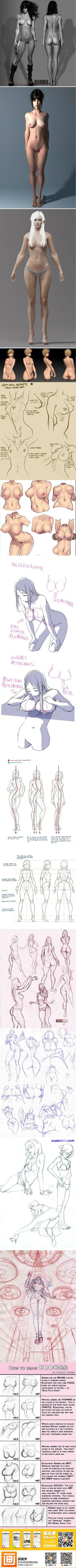 Body anatomy. How to draw female body.