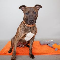 Adoptable Pets | Best Friends Animal Society-Los Angeles