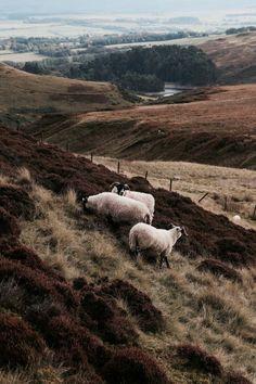 farm landscape photography kylebonallo: by Kyle Bonallo Animal Photography, Landscape Photography, Nature Photography, Beautiful World, Beautiful Places, Wild At Heart, Photos Black And White, Travel Photographie, Belle Photo