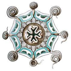 Aeginura grimaldii by Haeckel - Ernst Haeckel - Wikipedia, the free encyclopedia