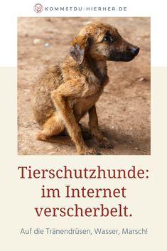 Tierschutzhunde im Internet – 5 Ärgernisse Internet, Dogs, Tricks, Animals, Adoption, Dog Nutrition, Animals Dog, Wild Animals, Cats