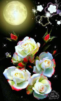 Beautiful Rose Flowers, Pretty Roses, Beautiful Butterflies, Love Flowers, Good Night Prayer, Good Night Gif, Good Night Image, Roses Gif, Flowers Gif