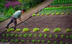 Március elseje lévén mondhatjuk, hogy elindult a tavasz, ez pedig elméletileg azt jelenti, hogy a kerti szezon is kezdetét veszi. Természetesen most azonnal még nem vághatunk bele a kertészkedésbe, de ahhoz éppen időben vagyunk, hogy eldöntsük, idén mit szeretnénk a kerttel kezdeni. Sokaknak…
