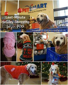Last minute holiday shopping for your dog at #PetSmart