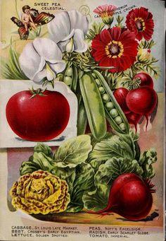 1898 Plant & Seed Company back page