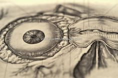 eyeball; optic; stare; different perspectives; space for copy