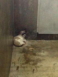 NEXT on DEATH ROW - VERY SAD and SCARED DOG. Located at the worst HIGH KILL Shelter in Texas, Odessa, Texas Animal Control. Must lay on the cold concrete floor in the dirt because they have no beds or towels there.  https://www.facebook.com/speakingupforthosewhocant/photos/pb.248355401855372.-2207520000.1395383496./746524745371766/?type=3&theater