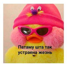 Memes Funny Faces, Stupid Memes, Hello Memes, Happy Memes, Russian Memes, Funny Mems, Cute Animal Memes, Aesthetic Iphone Wallpaper, Reaction Pictures