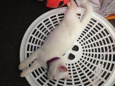 Misty's sleeping spots #2