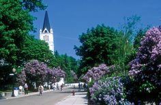 Wander Crave: Mackinac Island Lilac Festival
