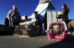 O transporte dos animais de estimação em voos deve ser feito dentro do kennel: é importante que os bichos possam se mexer no interior da caixa. Foto: STR/EM/D.A Press