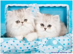Let these two cute kittens brighten up your day.