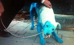 Blue Dog Rescues His Furry Companions from the Cold