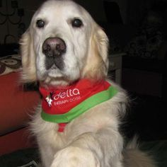 Oliver The Therapy Dog lives and works in NSW Australia