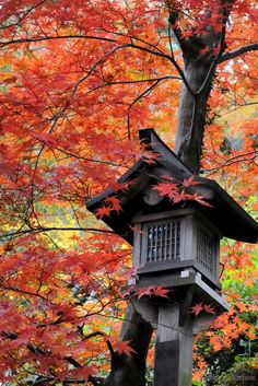 Fall,Katsuragi-hitokotonushi Shrine #Nara #Japan