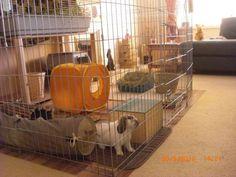 indoor rabbit houses | Wire Indoor Playpen