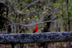 Don't forget about the little guys flying around the backyard this winter! - #nature http://www.motherearthnews.com/Editorial/Blogs/Nature and Environment/Best Kinds of Bird Food to Put out This Winter.aspx