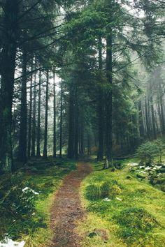"dpcphotography: ""Forest Trails """