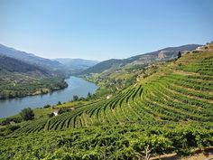 Where the greatest wine is made!  The view over parts of the Douro valley and Douro river. Douro is listed as a Unesco world heritage site.