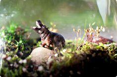 every terrarium needs an animal!