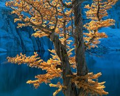 The Enchantments by Adam  Gibbs / 500px