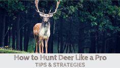 How to Hunt Deer Like a Pro (TIPS & STRATEGIES) -