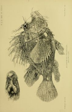 1891 - Proceedings of the Zoological Society of London. - Biodiversity Heritage Library