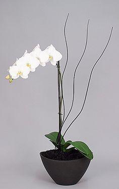 Drama orchid arrangement
