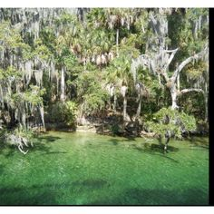 @penelope Florida springs