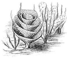 matthewvonhumboldt:  Mississippian Archimedes bryozoan