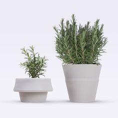 Image of FoldPot 3pcs Set ~  Growing Plant Pots