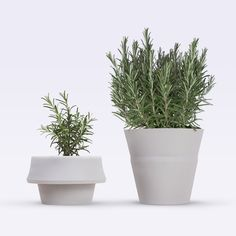 Image of FoldPot 3pcs Set ~  Growing Plant Pots