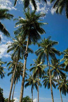 Obi Islands | SeaTrek Sailing Adventures - obi-islands-3 Free Iphone Wallpaper, Best Iphone Wallpapers, Eastern Travel, Maluku Islands, Leaf Texture, Sailing Adventures, I Love The Beach, Beach Aesthetic, Soul Art