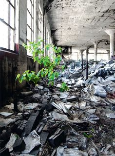 Image detail for -tree grows in an abandoned school in detroit