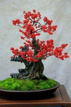 Bonsai con bayas rojas.