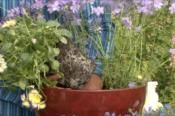 How to Grow Turnip Plants in Containers | DoItYourself.com