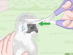 How to Care For Silkie Chickens. Thanks to their fluffy feathers and docile behavior, silkies are a great starter bird for anyone looking to begin their own backyard flock. Silkies generally require smaller coops than other chickens. Fancy Chickens, Types Of Chickens, Raising Backyard Chickens, Bantam Chickens, Pet Chickens, Urban Chickens, Chicken Pen, Chicken Breeds, Chicken