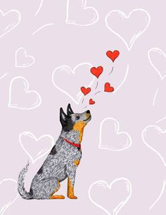 Imagine how happy this adorable handmade card will make that someone special feel! This card features our hand drawn Australian Cattle Dog sending up some love with sweet red hearts. Our customers describe our cards as mini pieces of artwork in and of themselves. This card is guaranteed to surprise and delight the person you decide will receive it!    THE DETAILS -4.25 x 5.5 inches (11 x 14 cm) folded card -Matching envelope available in Kraft, Red, or Bright White -Professionally printed on…