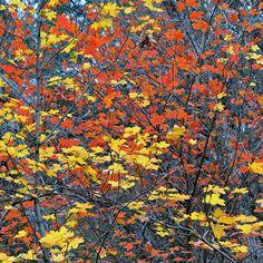 Red and Yellow « Igor Menaker Fine Art Photography