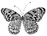 black and whiter butterfly glitter